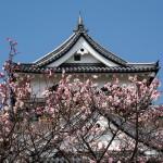 青春18きっぷ 春爛漫のお城・桜・ご当地グルメを満喫出来るプラン