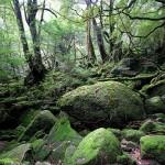 口永良部島の噴火 屋久島観光への影響はある!?