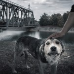 After the Hurricane: Keeping Pets Safe and Healthy