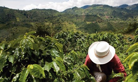 Nespresso Invests in Post-conflict Colombian Coffee