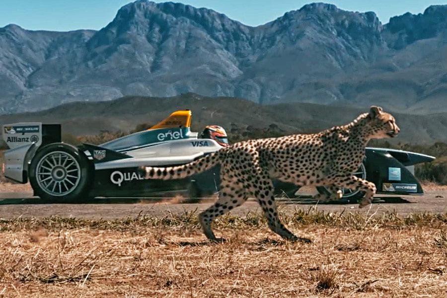 Watch: Formula E Car vs. Cheetah. Which is Quicker?