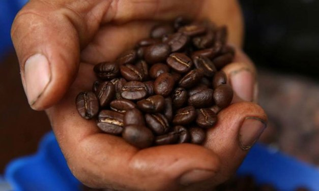 Landmark Project Helps Peru Coffee Farmers Combat Climate Change