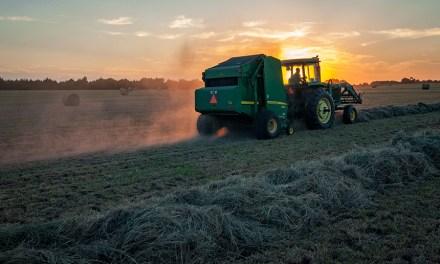Halve the Farmland, Save Nature, Feed the World