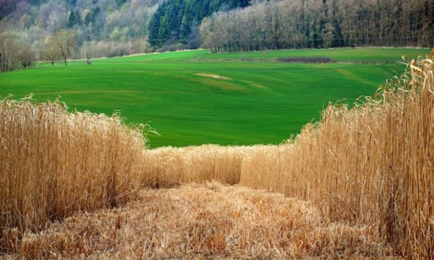 Finding Value in the Margins to Build a Bioeconomy
