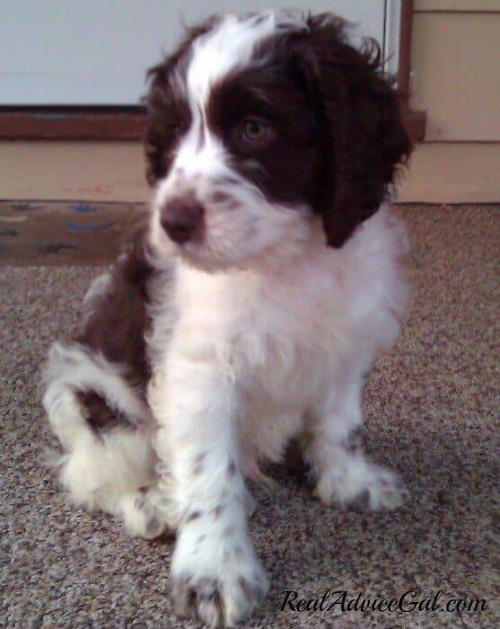 Our four legged friend as a puppy