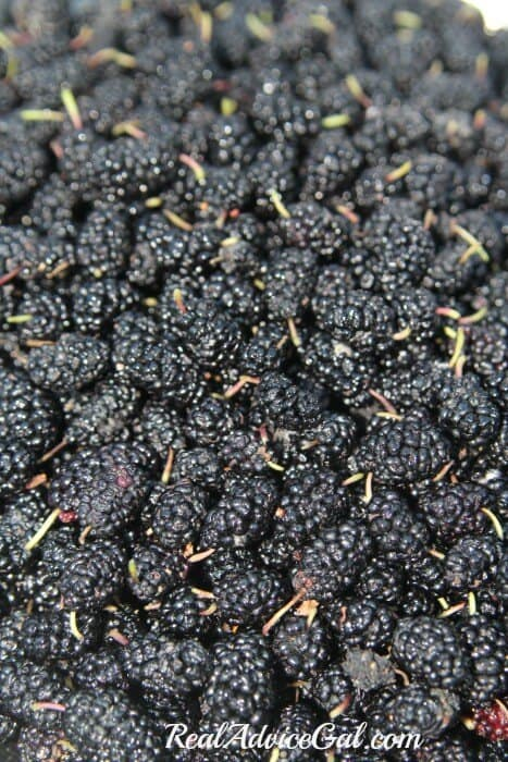 Mulberries are delicious by themselves or try one of these mulberry recipes