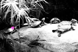 Flower-power turtles, Hong Kong