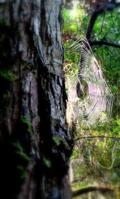 The silver cobwebs