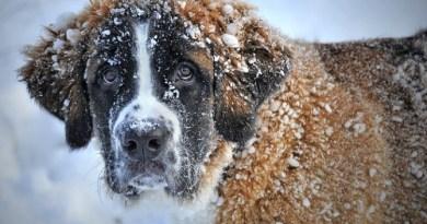 Atenție! Urmează patru zile de ger în toată România. Temperatura poate coborî până la -20. Prognoza meteo