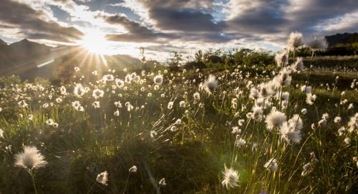 Pravidla pro kempování v Norsku: Friluftsliv