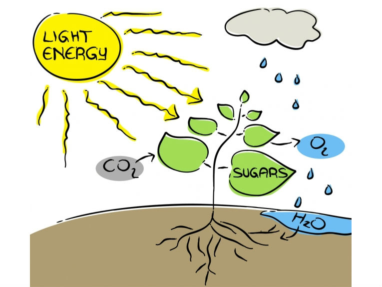 photosynthesis-dream-renewable-energy_1_02842012