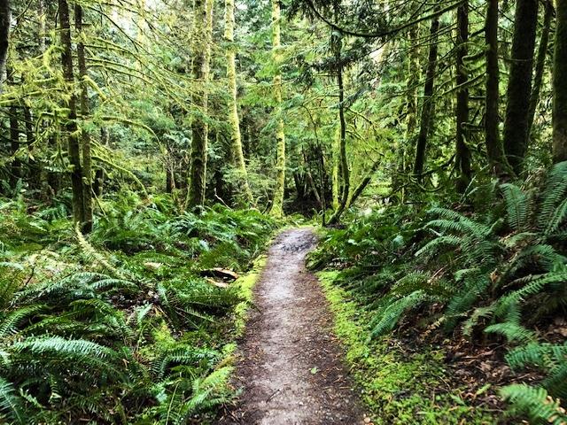 Trails in Bellingham Washington