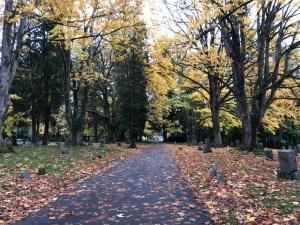 Fall leaves in Bellingham Washington