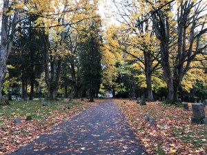 Fall leaves litter the walking path at Bayview Cemetery in Bellingham Washington