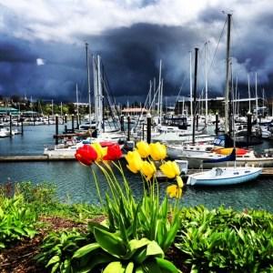 Squalicum Harbor in Bellingham