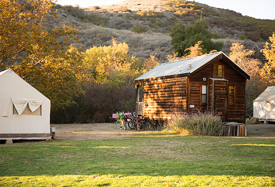 CG4A0550 meadow shot