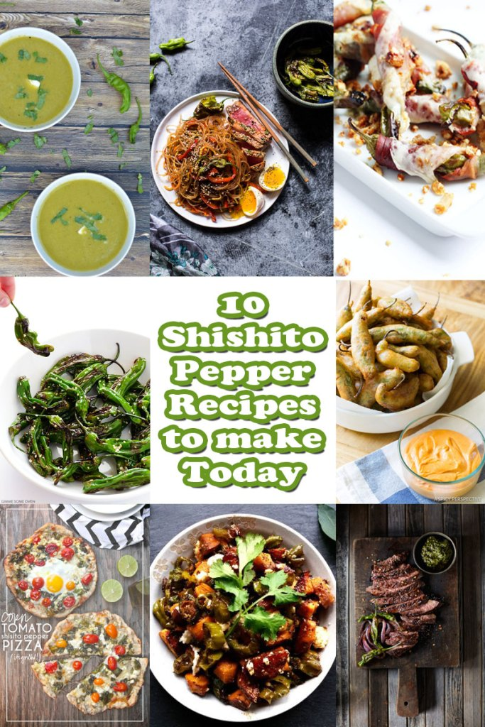 shishito pepper recipes