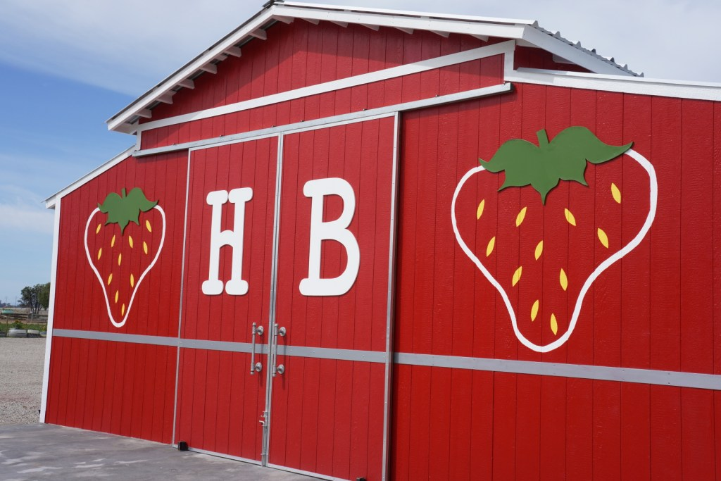 harry's berries farm