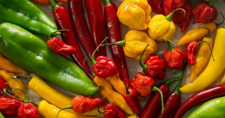 Know Your Chile Peppers: The Ultimate Guide