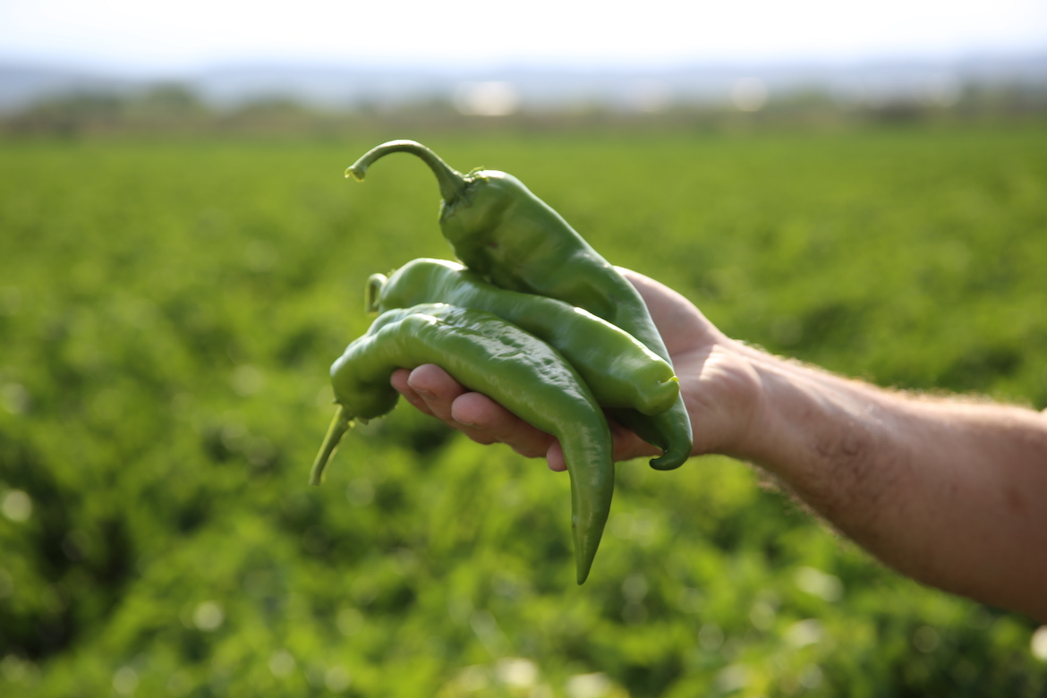 The Ultimate Guide to Hatch Chiles