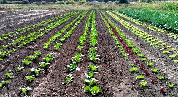 saving money farm share rfrd