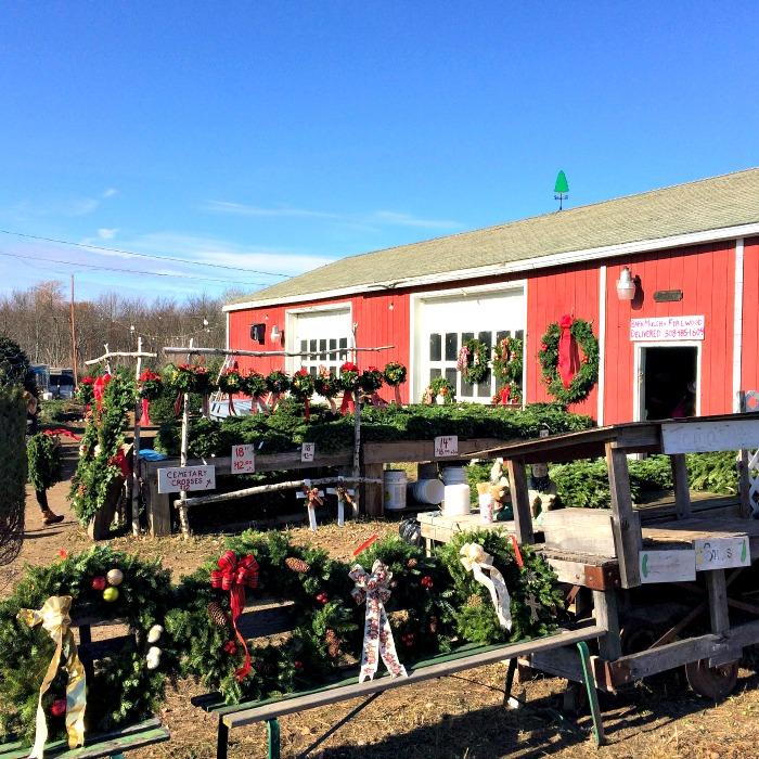 The Real Christmas Tree Farm: Christmas Tree Farm Mulled Cider
