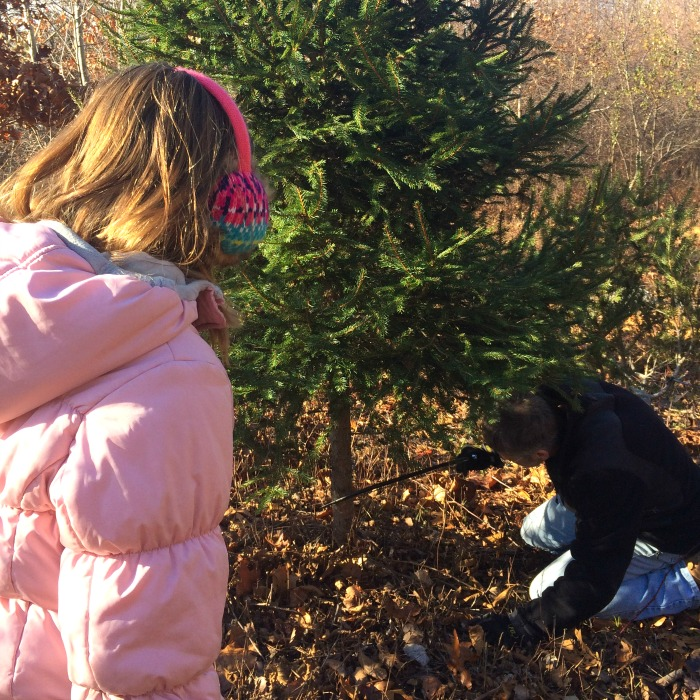 Cutting down our Christmas tree at a local farm