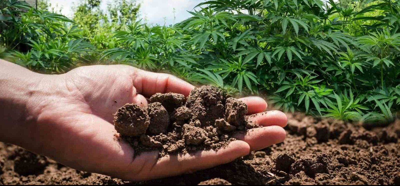 Cannabis soil