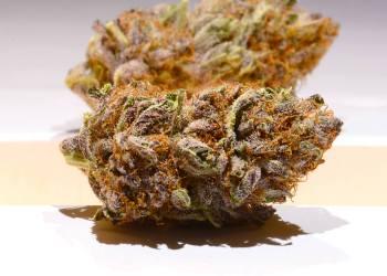 Hazelnut Cream Strain Review | Real  Functional