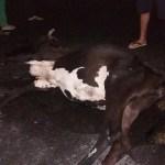 Animal na pista provoca acidente na PI-112