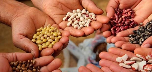 Nueva jornada de intercambio de semillas en el  vivero de El Arenal
