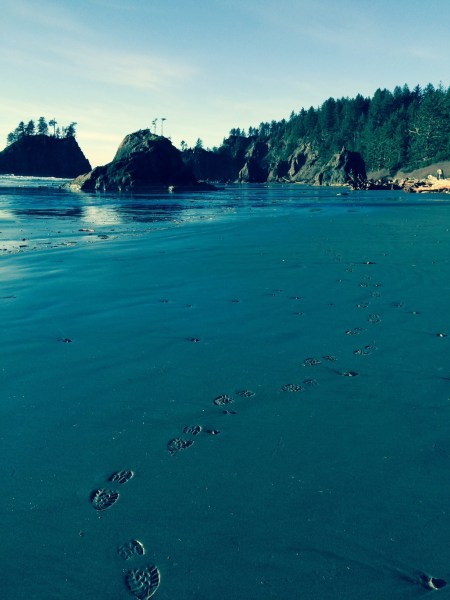 Second Beach Footprints, Olympic Coast Feb 2016
