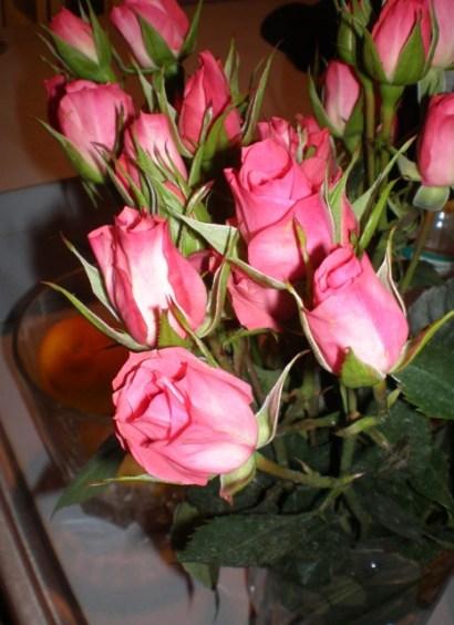 christmas-roses-2007.jpg