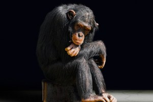 Méditation-monkey-mind-2