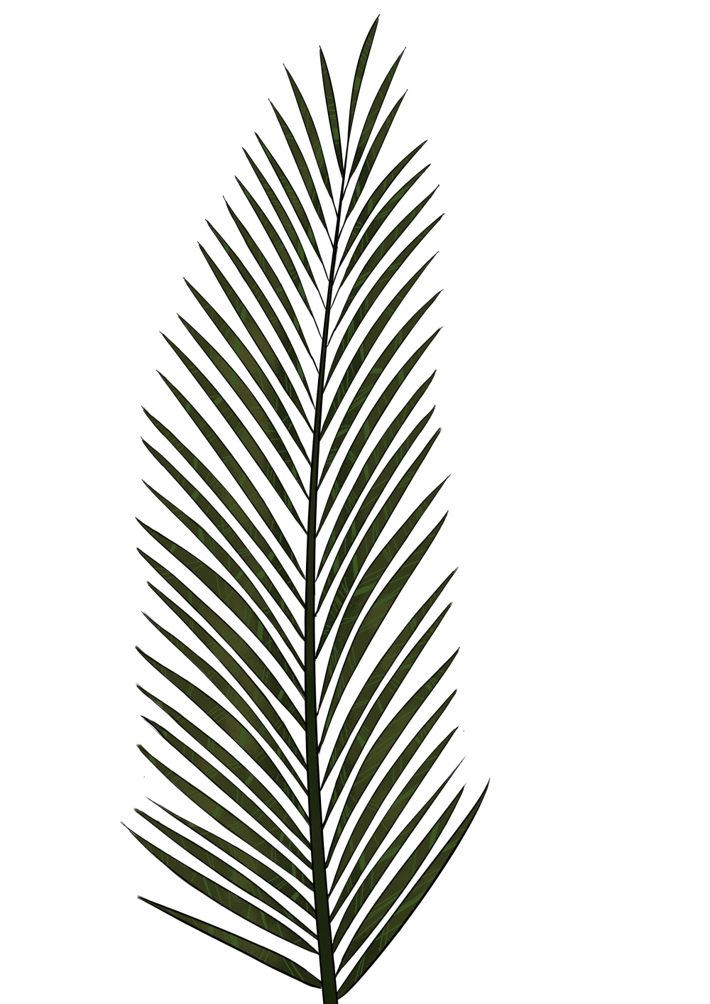 medium resolution of palm leaf png textures and style radin mas