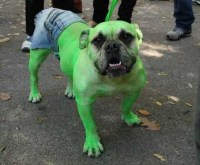 7 Creepy Halloween Costumes For Your Dog This Year ...