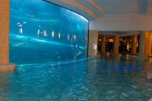 Golden Nugget Las Vegas Swimming Pool