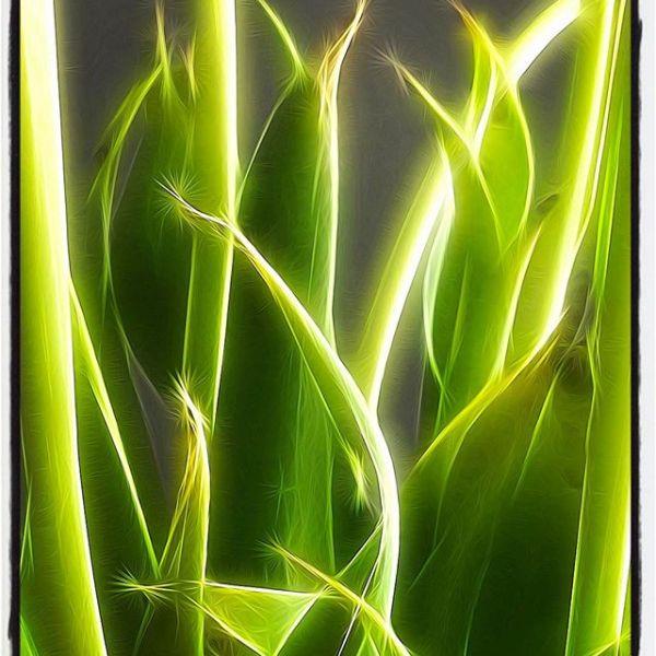 Glowing Tulip Leaves (edit)