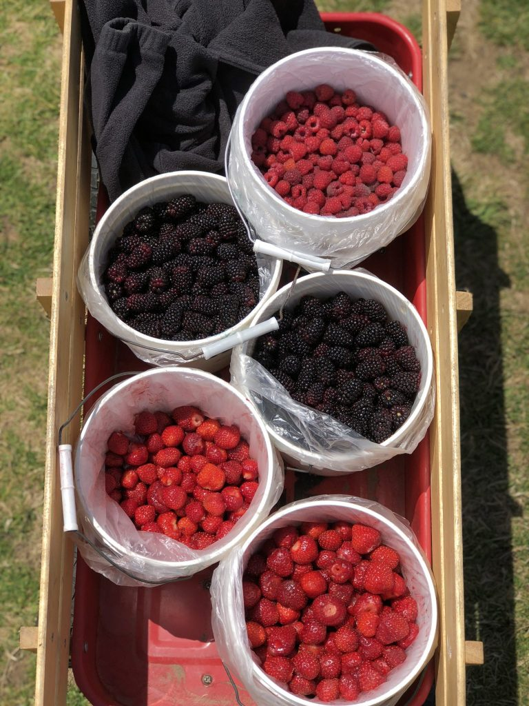 Hoffman Farms Store Really Into This U-Pick Berries