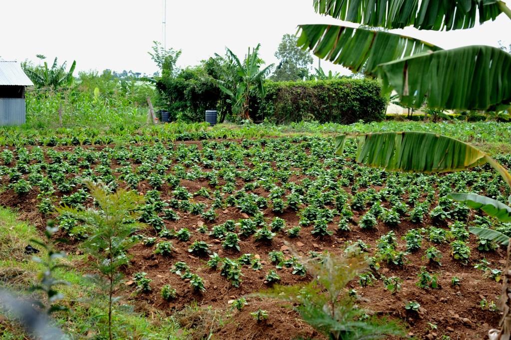 plants growing in garden