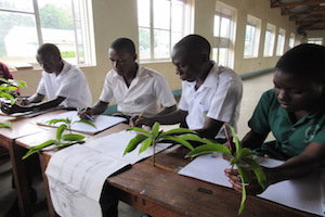 students working in uganda