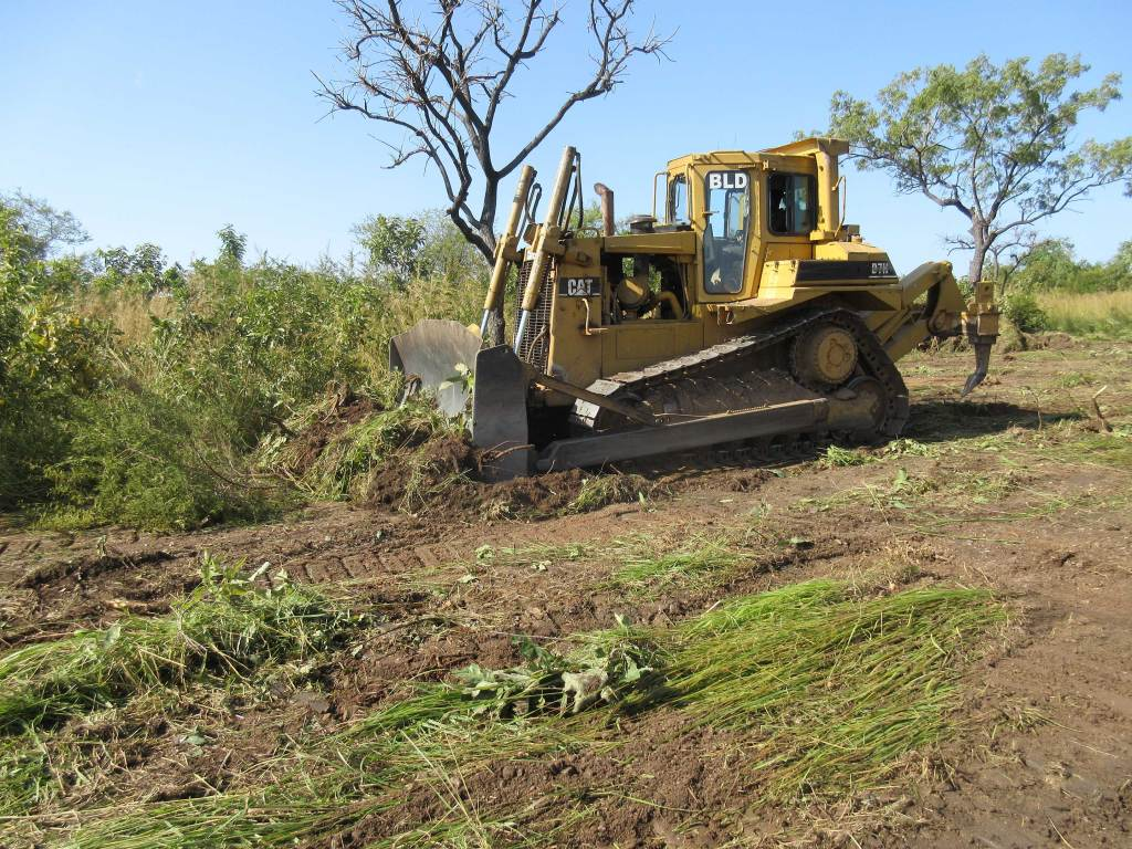 Brush being cleared by contractor