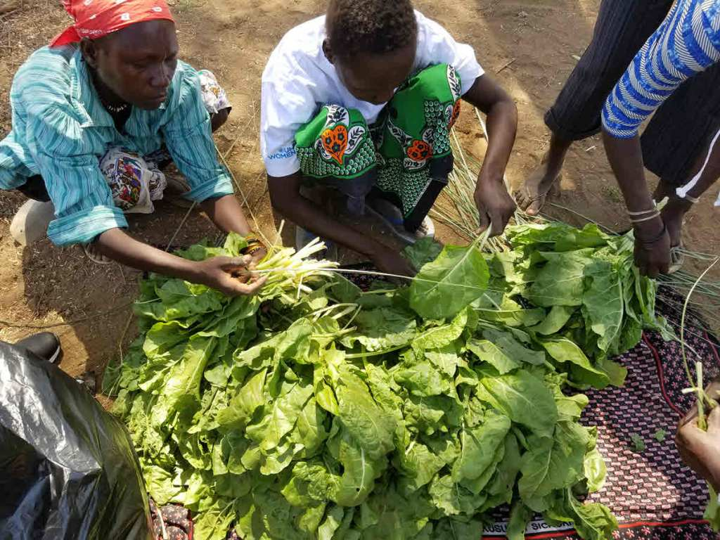Project beneficiaries bundling spinach harvested from the greenhouse