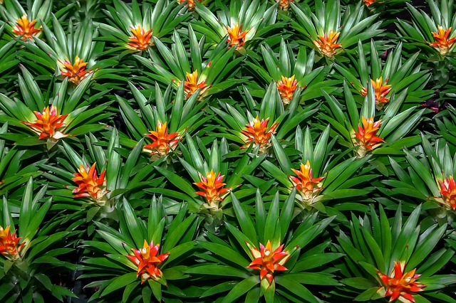 jungle plants photo