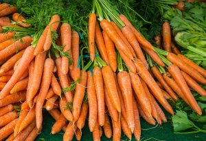 carrot Safe Fruit and Vegetable for dogs