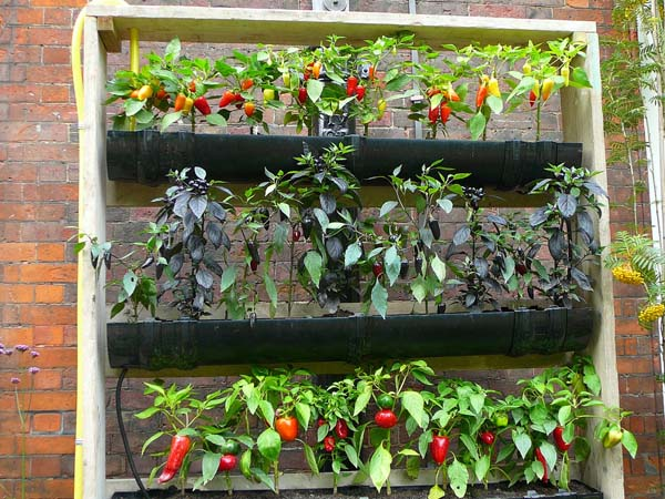 Short on Growing Space Build a Vertical Garden Your Very Own