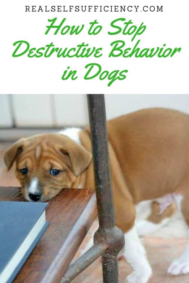 Destructive Behavior in Dogs