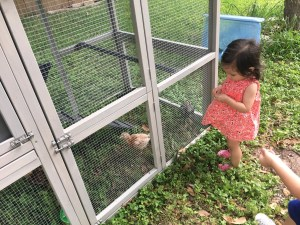 Review: Innovation Pet Deluxe Chicken Coop - Real Simple MamaReview: Innovation Pet Deluxe Chicken Coop - Real Simple Mama