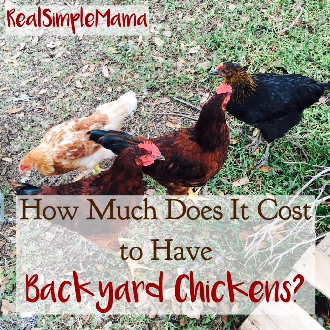 title image hen pet flock cost money How Much Does It Cost to Have Backyard Chickens? - Real Simple Mama