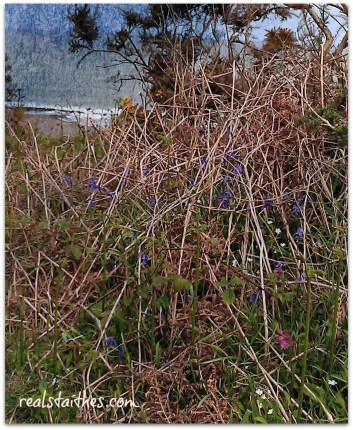 bluebells-port
